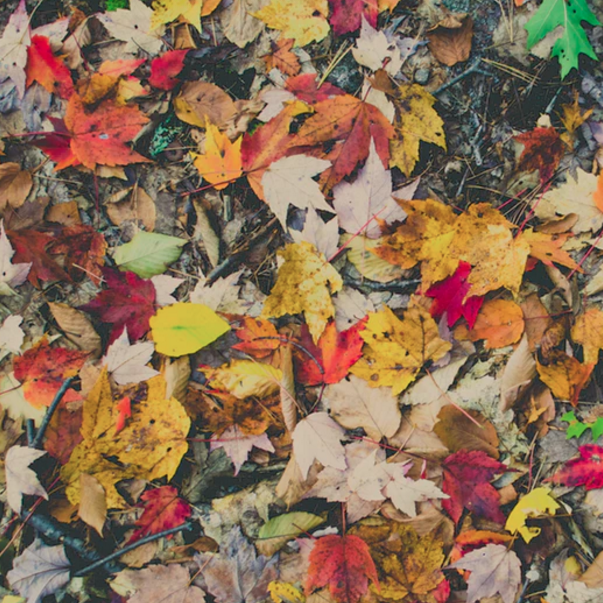 Autumn leaves fallen on the ground forming many colours