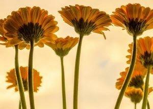 flowers-3705716_960_720.jpg